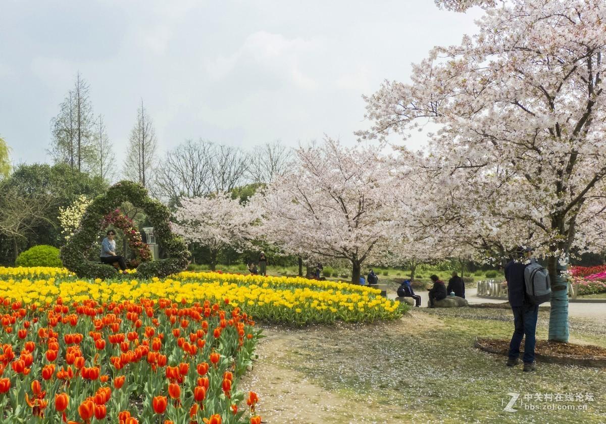 2019上海植物园花展-郁金香