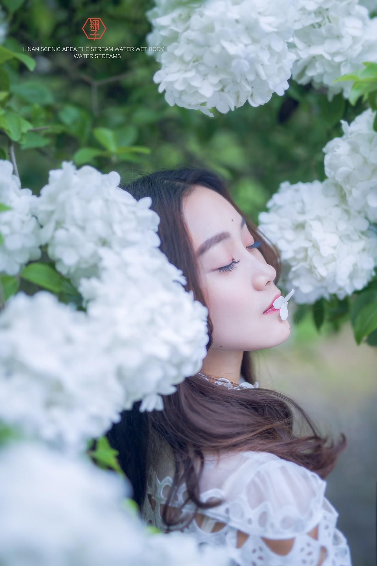 【翔子视觉】绣球花树下