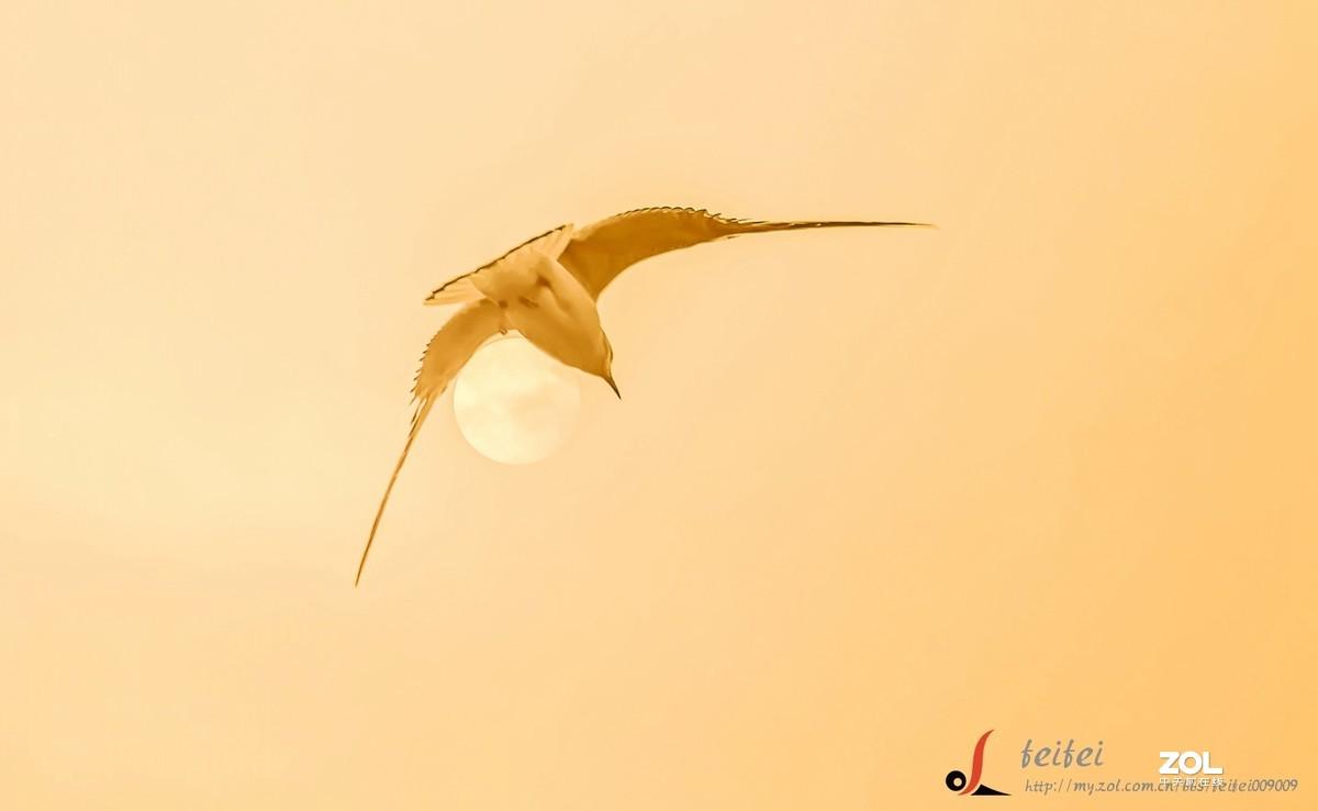 ——夕阳下的海鸥——