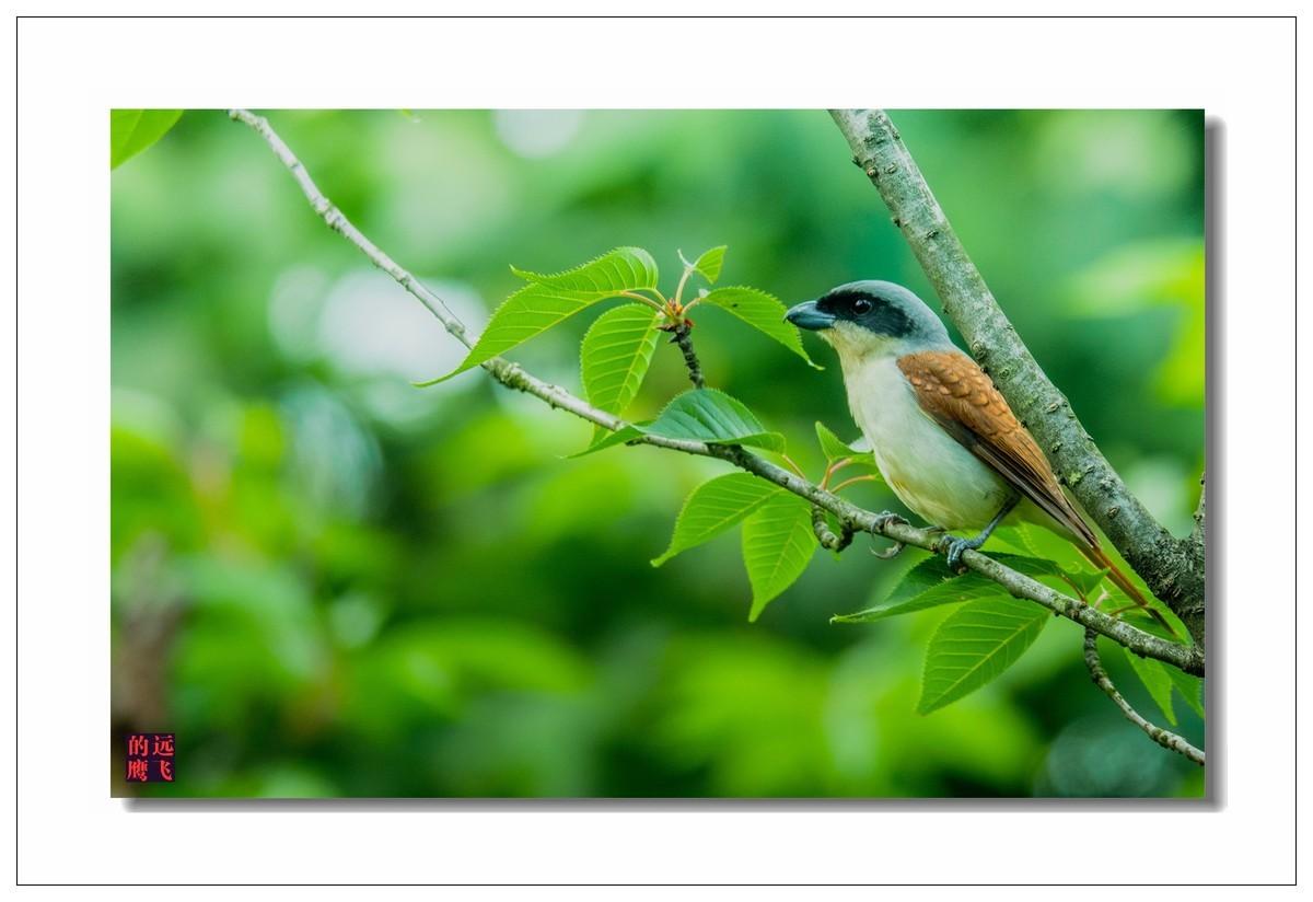 练习拍鸟4