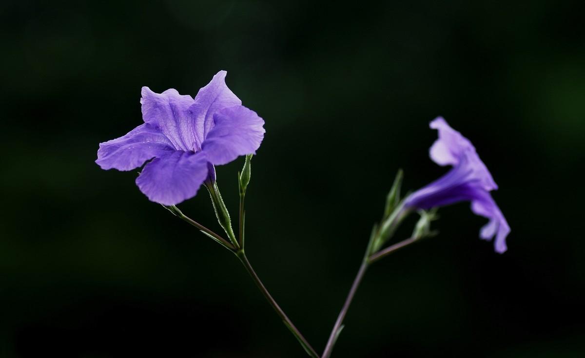 草坪上紫色的花