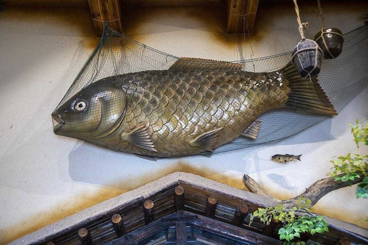 子非鱼,安知鱼之乐