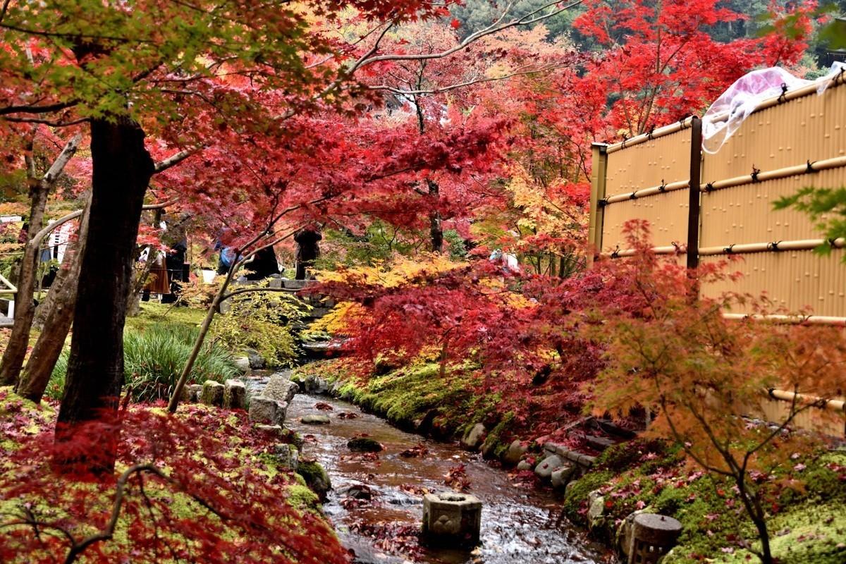 日本关西红叶狩——京都篇——永观堂观红叶【8】