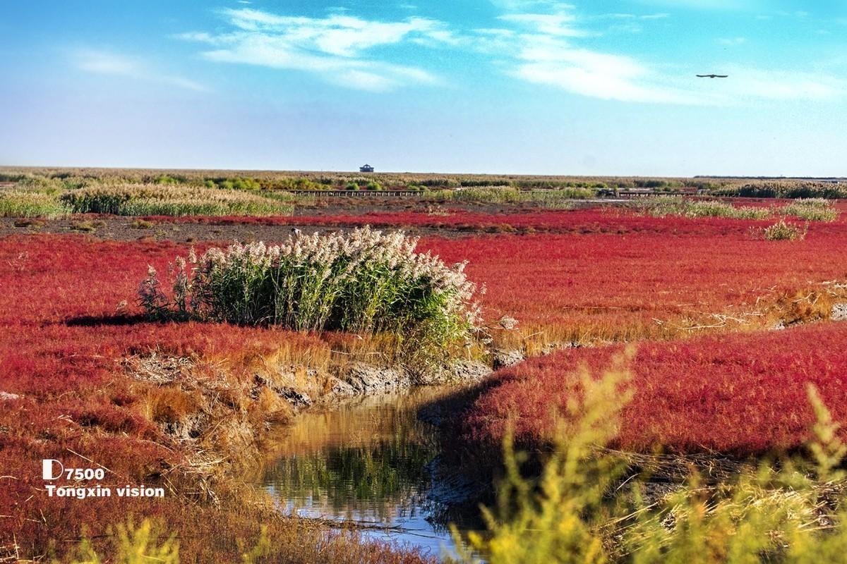 秋季的红海滩(7)