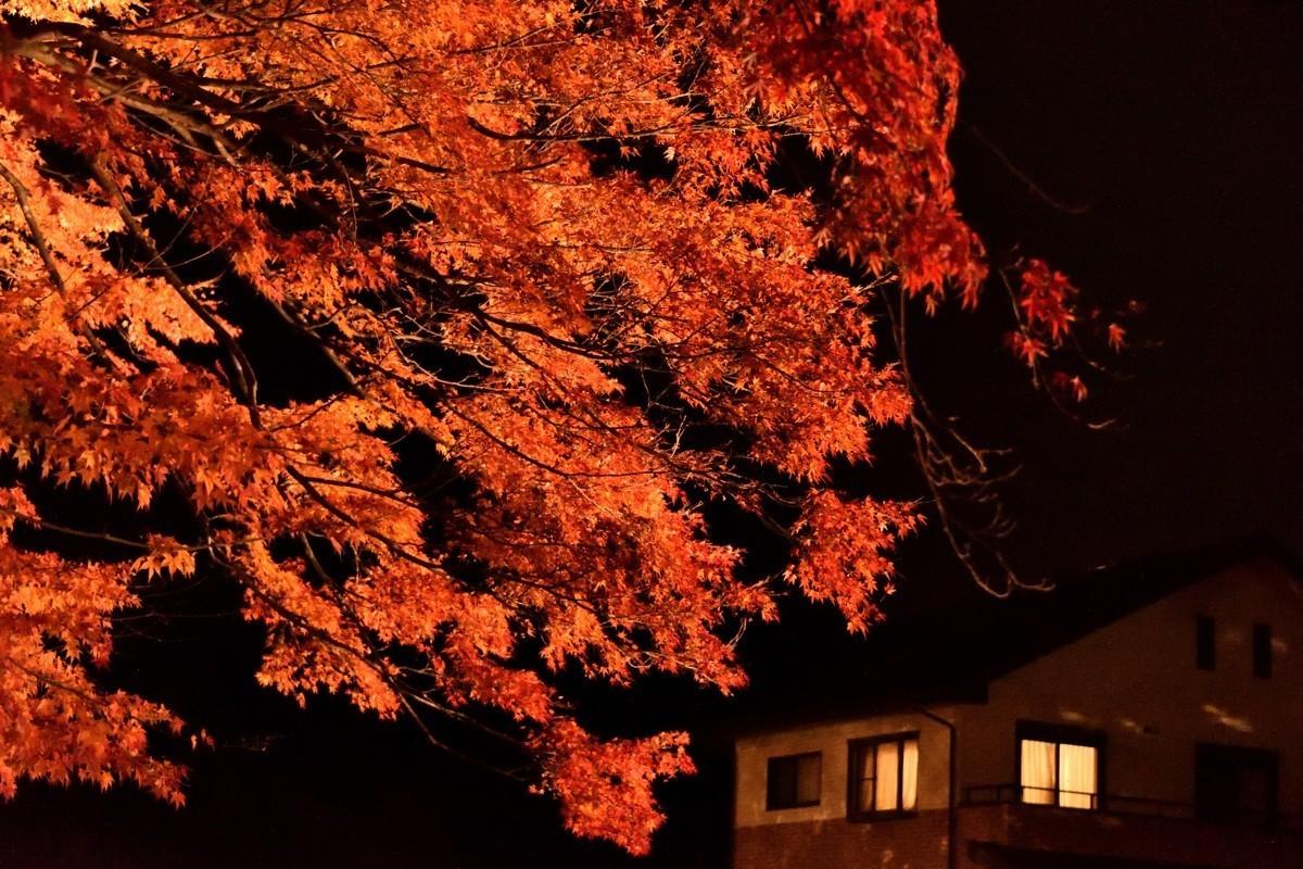 日本关西红叶狩——河口湖——夜枫【2】