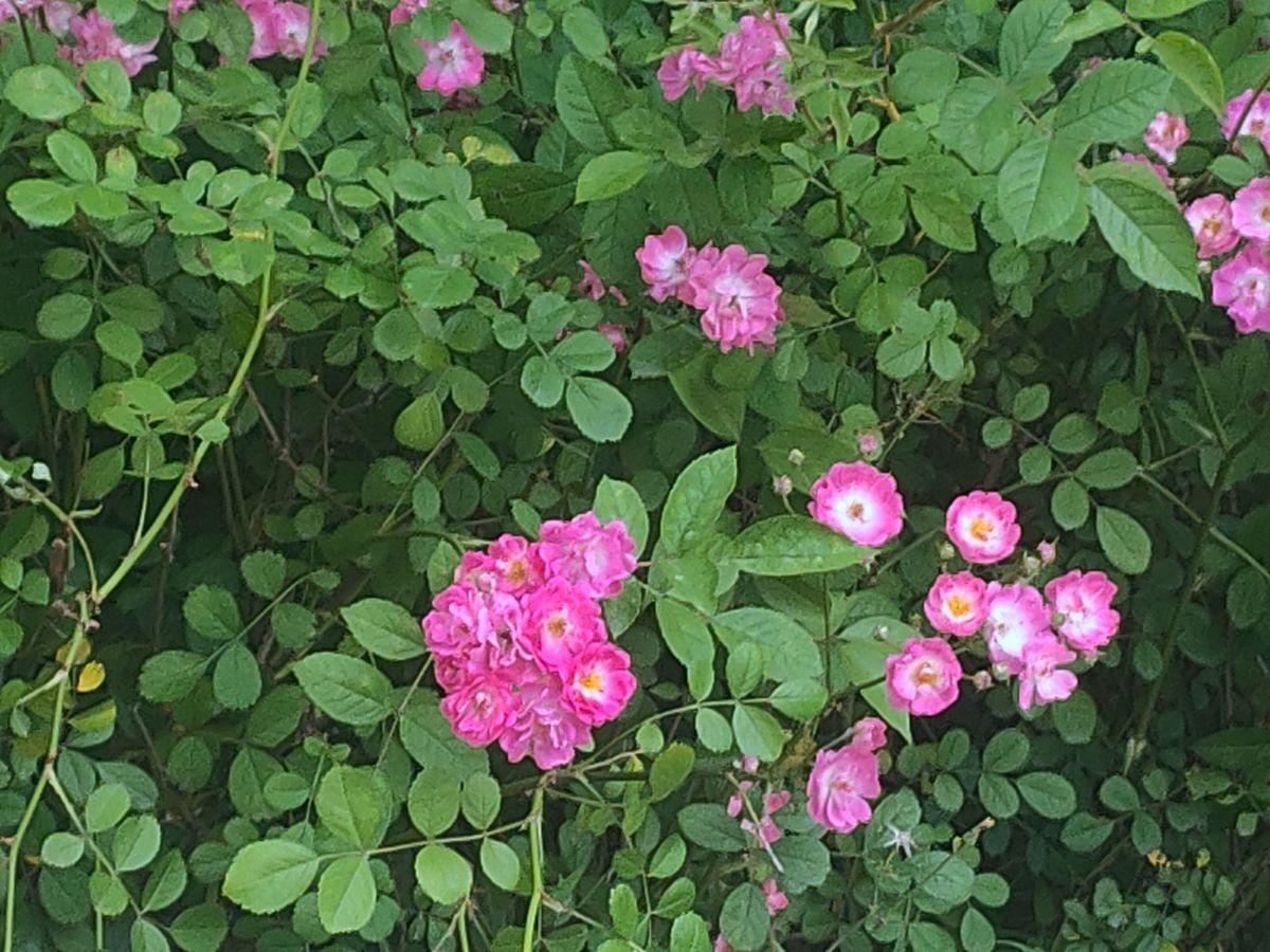 花卉系列【2725】