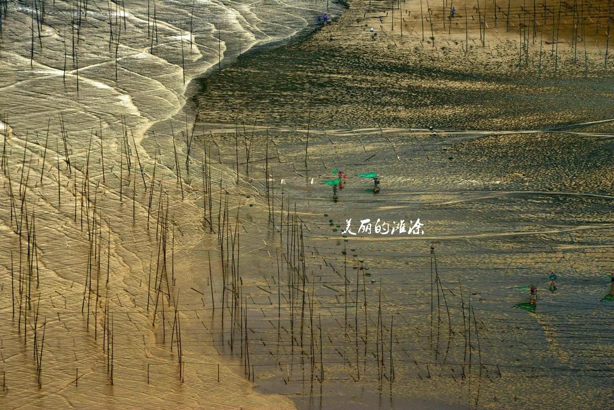 美丽的滩涂