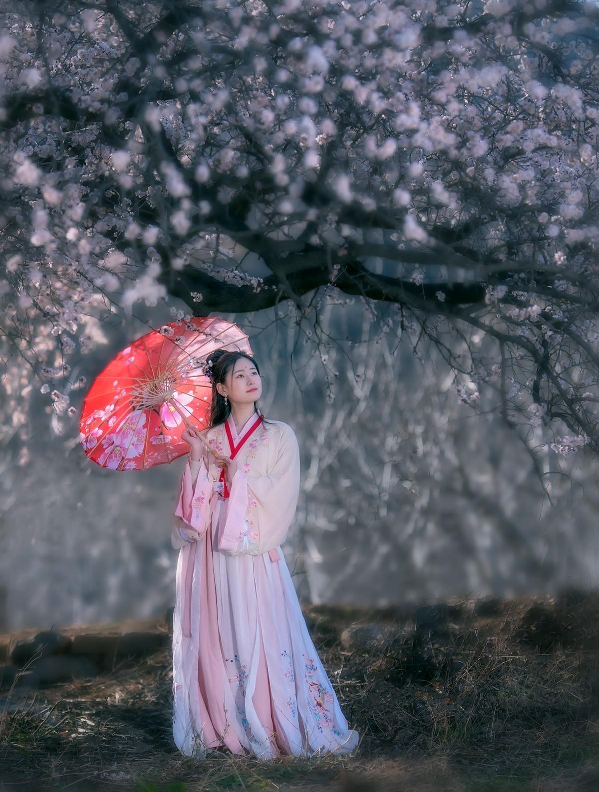 春风十里杏花香