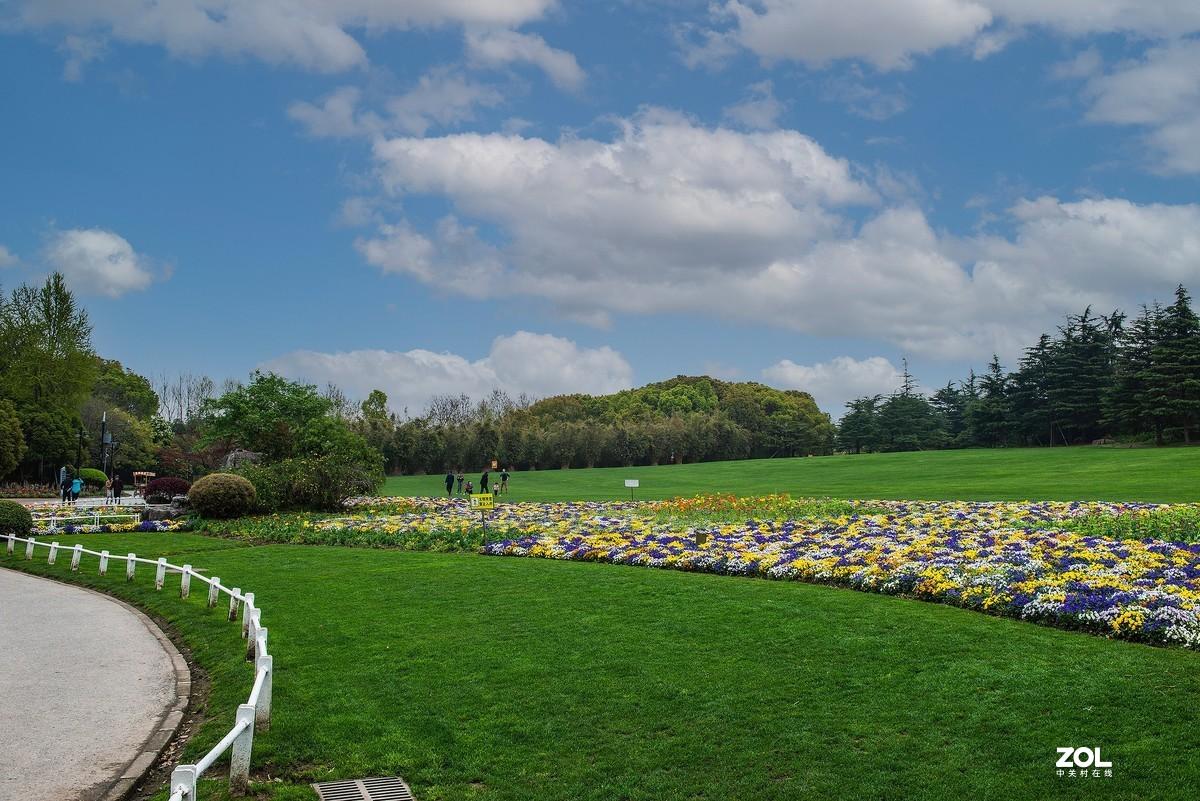 公园随拍----草坪