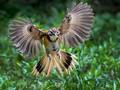 尼康D500相机初次进行鸟类拍摄。