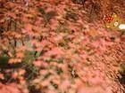 「熊出没」红叶枫了