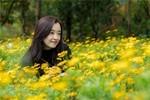 黄金菊花儿开