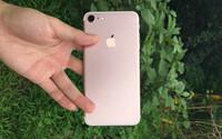 """#约稿#要火!iPhone 7""""玫瑰金""""变了"""