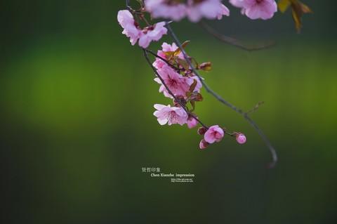 ------  春   暖   花   开  ------
