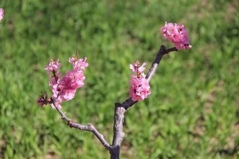 #又是一年春好处#春日十里桃花