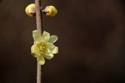 百般红紫斗芳菲——春花(17)
