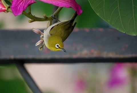 小鸟绣眼…请假帖