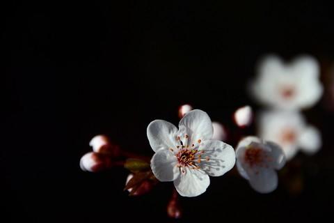 百般红紫斗芳菲——春花(20)