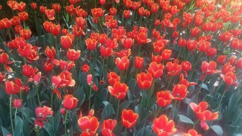 #为4月命名#姹紫嫣红,千花争艳