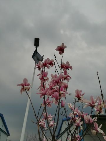 #佳能EOS M100-春天来了#分享春天的气息