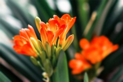 【迎春花卉】
