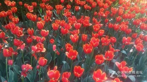 #ZOL月赛-春暖花开#百紫千红一片绿