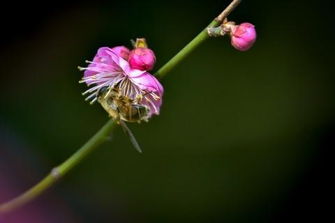 荟萃园拍梅