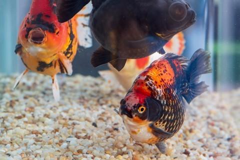 观赏鱼随拍 7