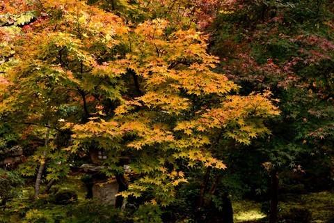 日本关西红叶狩——京都篇——比叡山圆光寺【6】