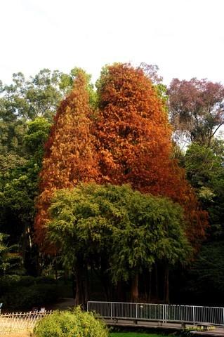 广州天河公园秋色