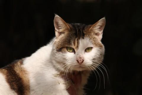 冬日暖阳下慵懒休息的猫