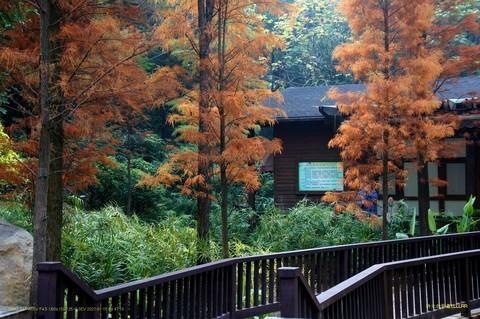 广州 珠江公园秋色