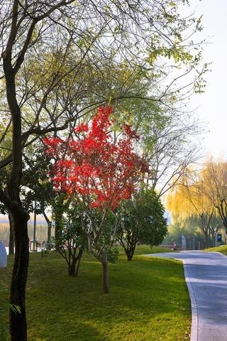 西安曲江池冬景影像