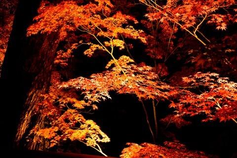 日本关西红叶狩——京都篇——南禅寺赏夜枫【1】