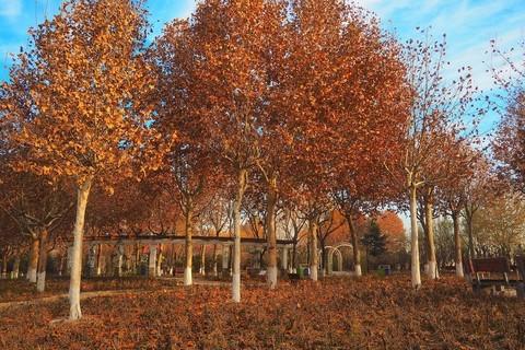 冬日·东环公园