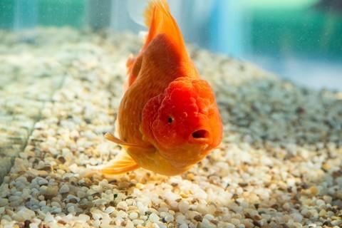 观赏鱼随拍 8