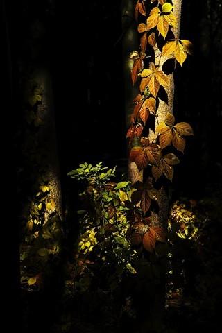 美丽的秋叶,唱起了秋歌