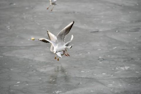 海鸥翱翔(3)