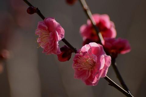 百花迎春----祝朋友们新春快乐!