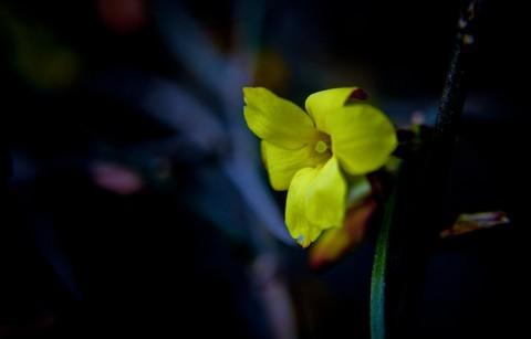 辛丑年第一帖——迎春与腊梅