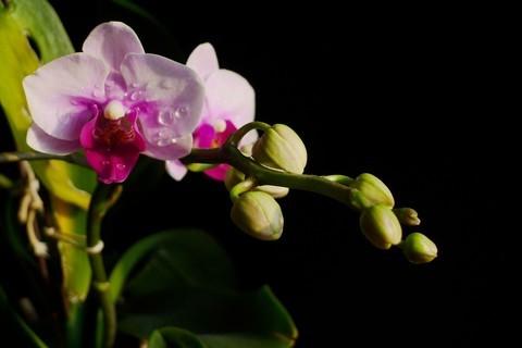 初一拍的兰花