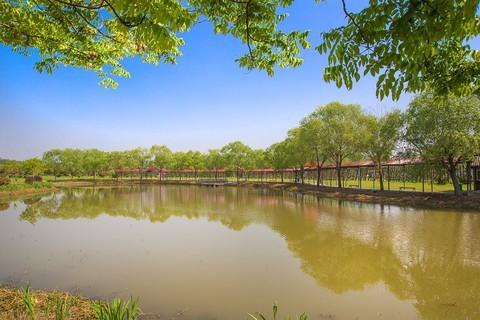 2021-02-13扬州芍药园