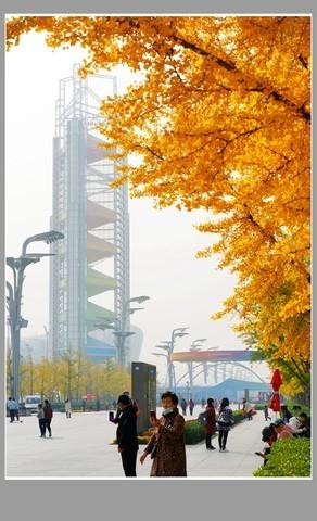 奥林匹克公园的银杏林201031(1)