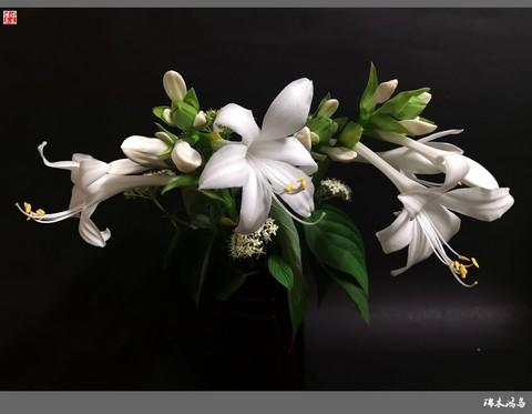 【小院的花】16.又到玉簪花开季