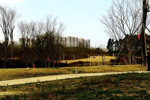 【春节在成都】(三圣花乡)(4)!去合肥一论坛给各位师友们拜年了