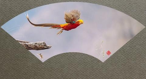 【老张光影】2021——花鸟图