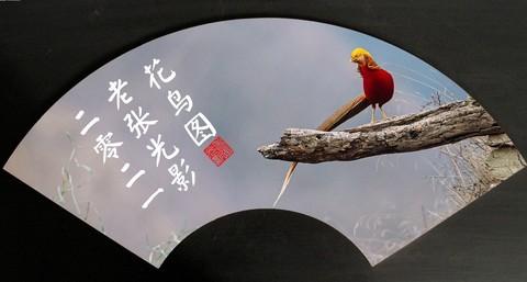 【老张光影】凤凰遇上鸟鼠斗