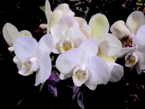 试机拍摄几种花花 -------。