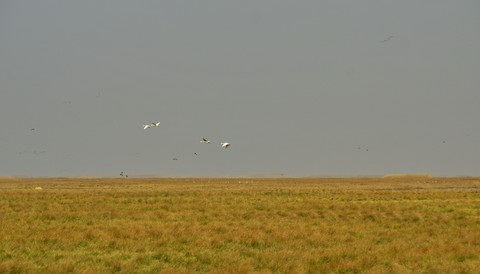 鄱阳湖冬季旱时大草原