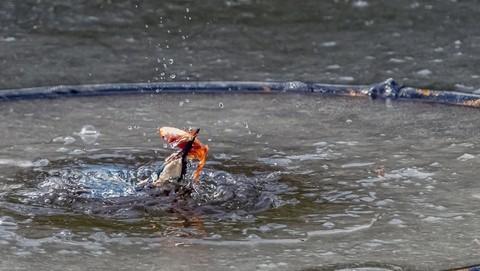 翠乌破冰下抓魚